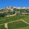 Il concorso per la valorizzazione della qualita' vitivinicola