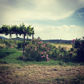 Colline di Toscana