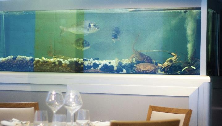 Restaurant Taste - Acquario