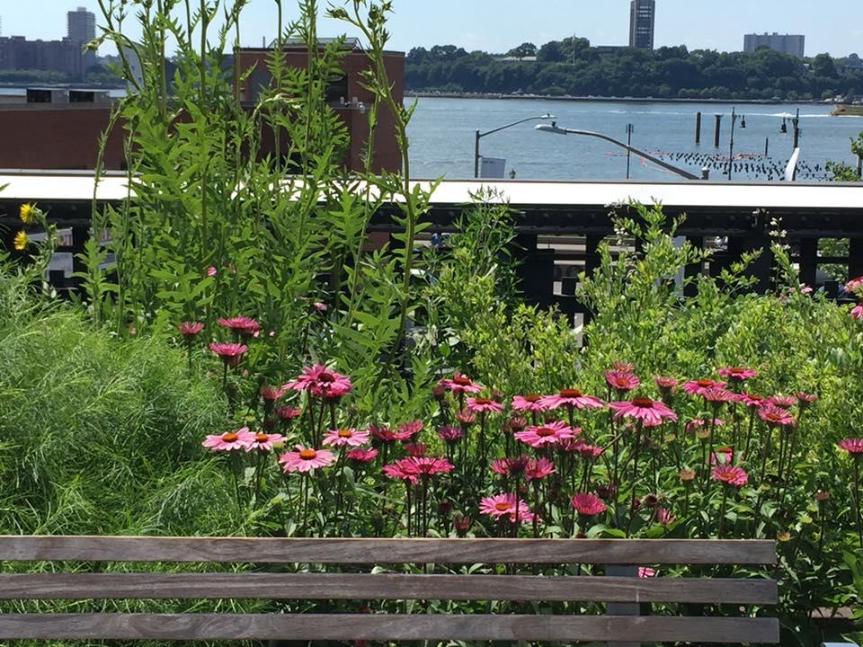 Uno scorcio della High Line