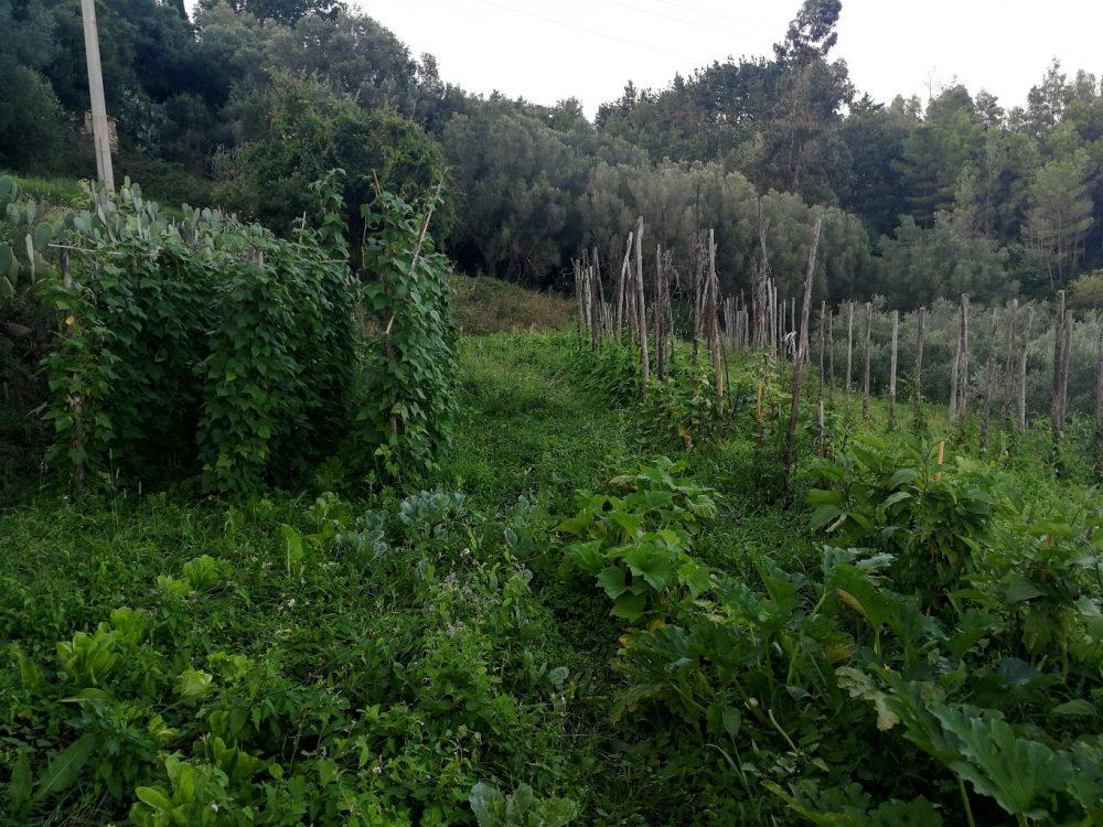 Azienda Agricola Silva Plantarum - l'orto