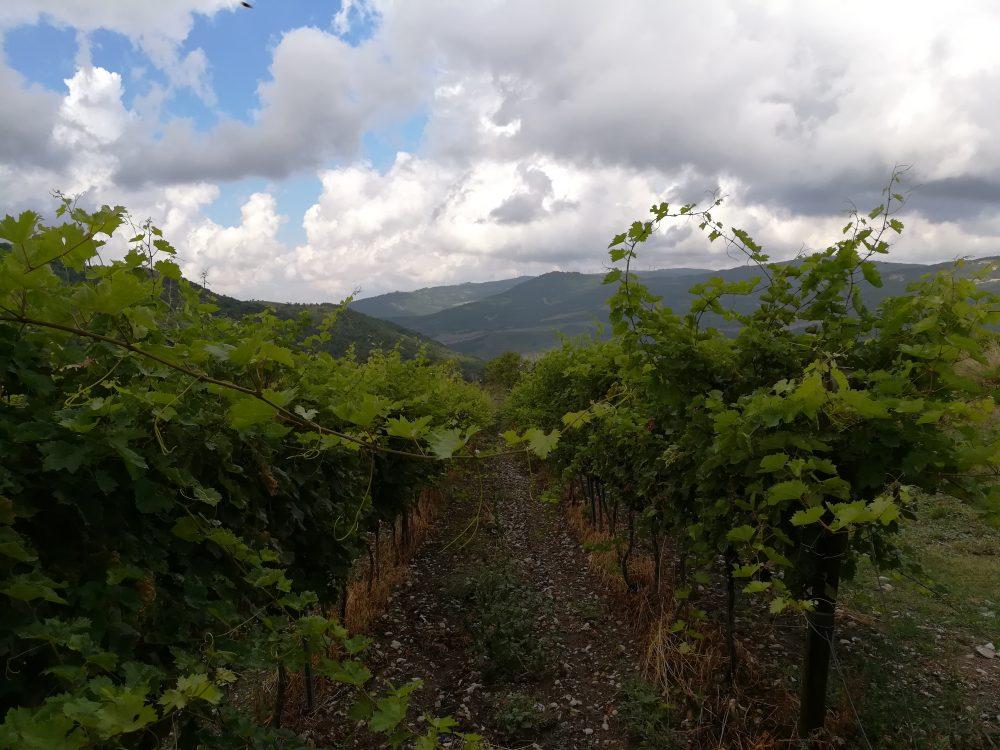 Bed & Wine Rocco Zambri - Le Vigne