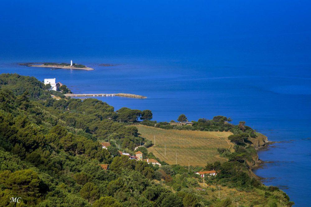 Il Colle del Corsicano Vigneto a Punta Licosa