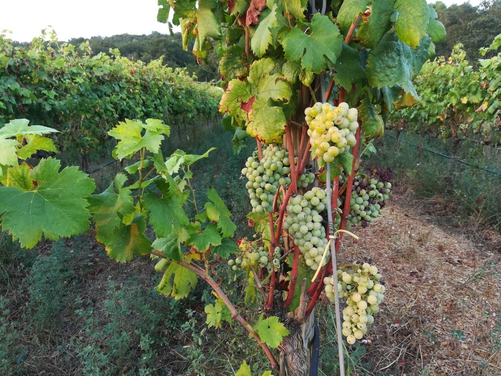 Masseria Torricella