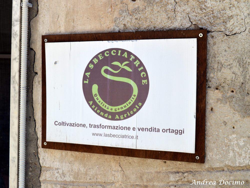 Pepe In Grani a Caiazzo. L'azienda agricola La Sbecciatrice