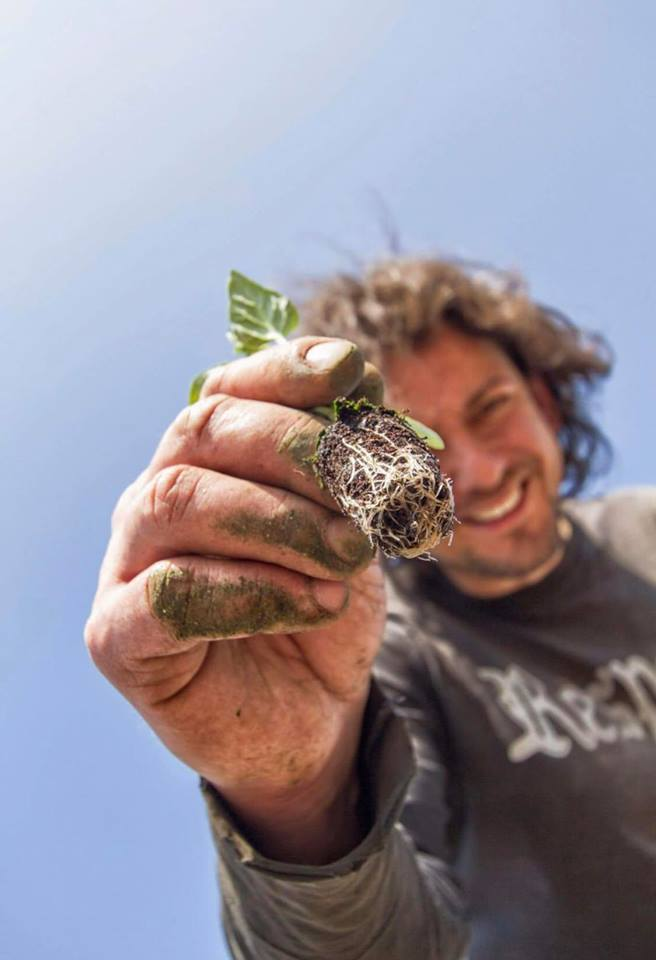 Trapianto Pomodorino Giallo 2015