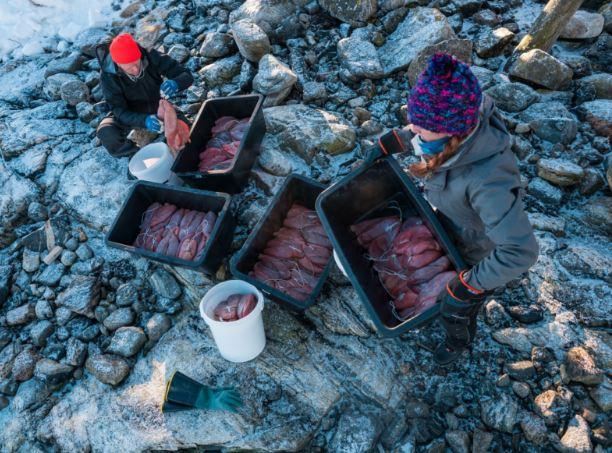 Bottarga Borealis- il lavoro dei pescatori