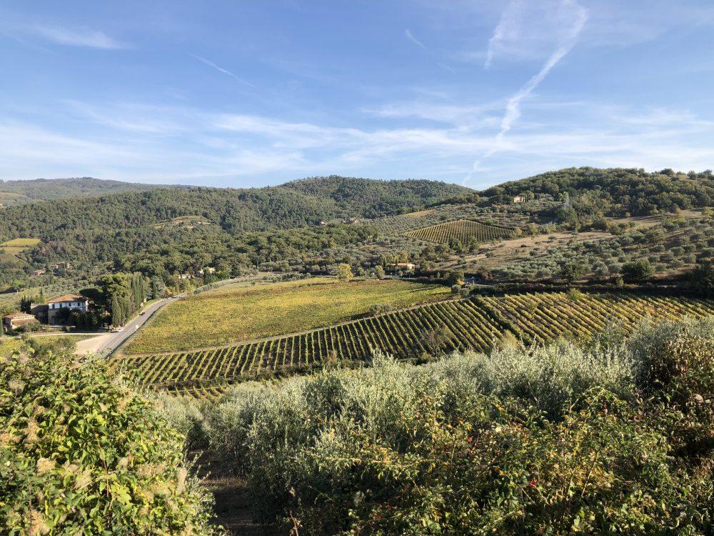 Vignamaggio - le vigne