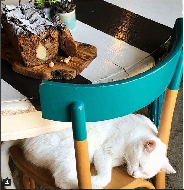 Romew Cat Bistrot