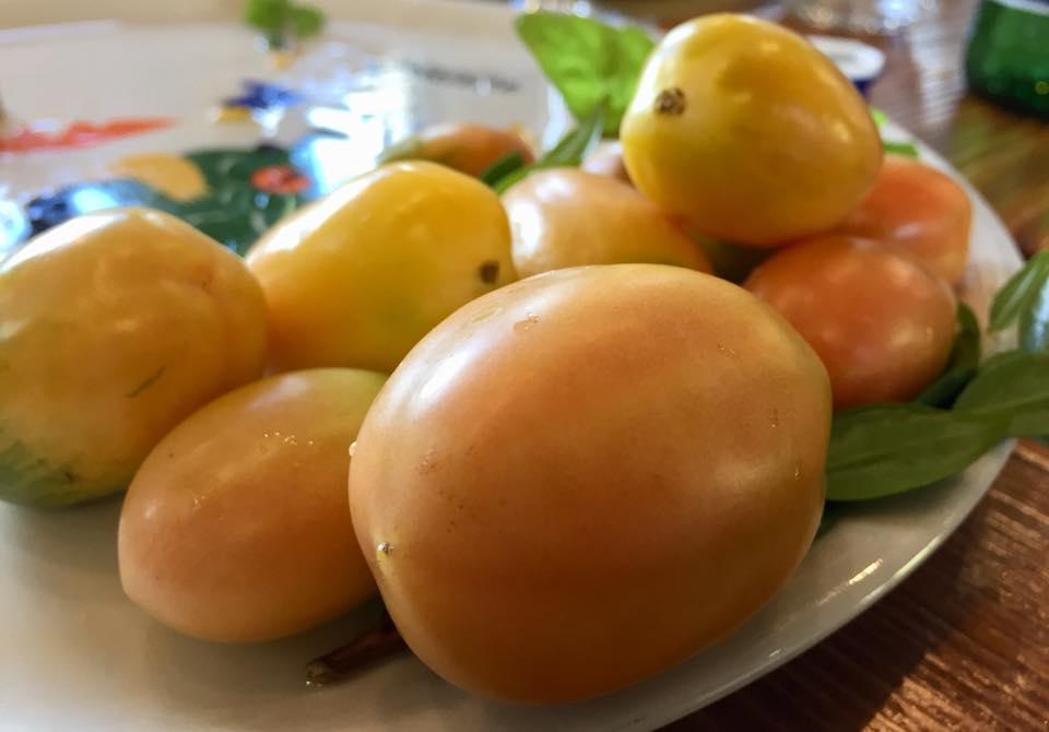 Pomodorini di Rofrano