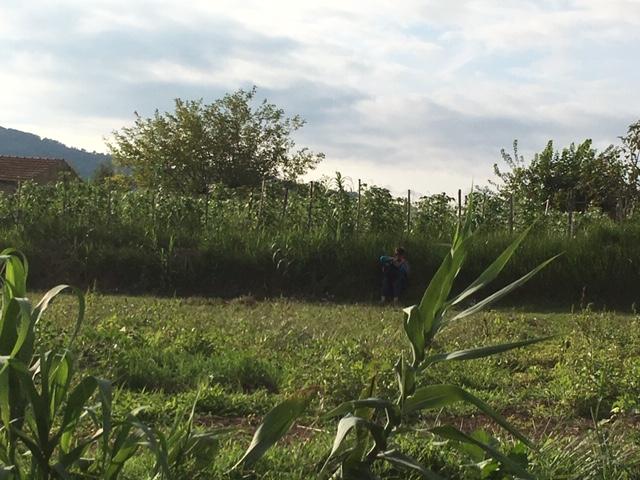 Azienda agricola Ferrante