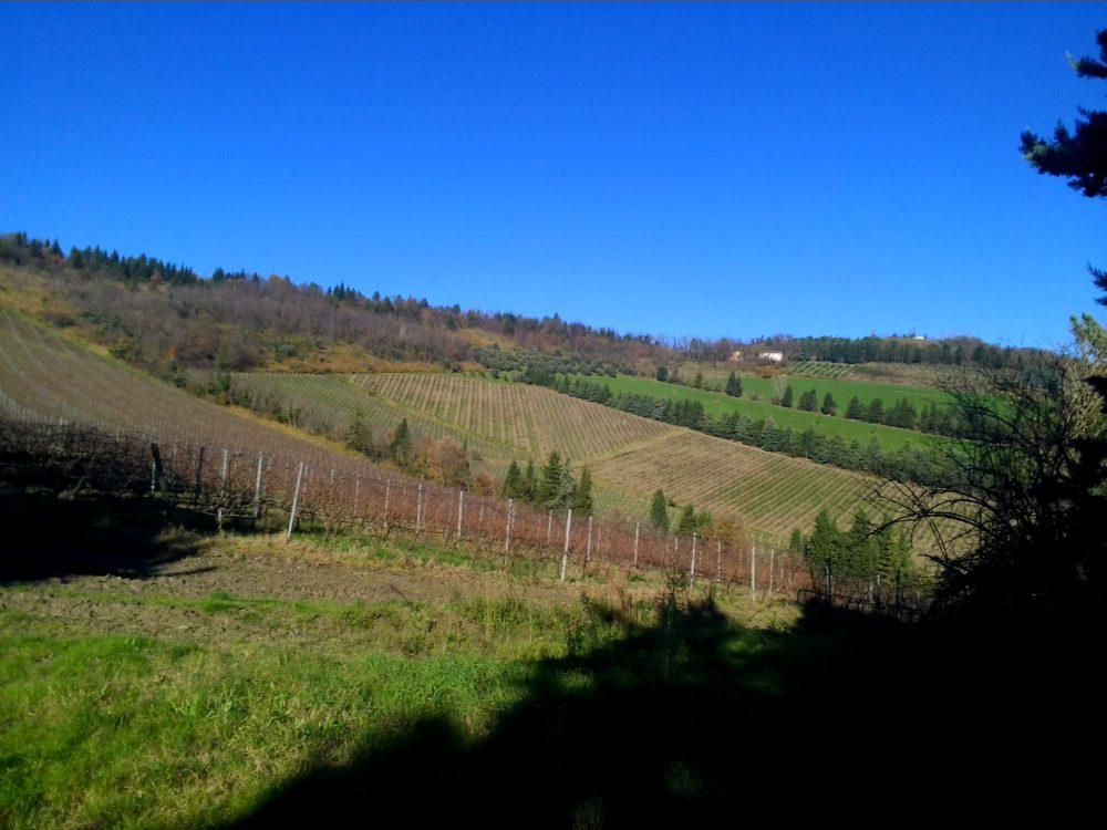 Noelia Ricci vitigni foto - www.21grammy.com