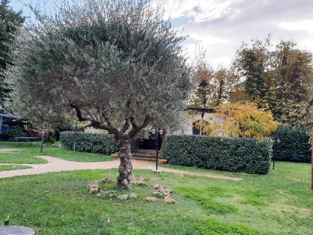 TerrAntica Braceria - giardino