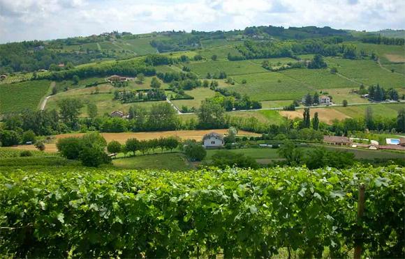 Paesaggio Nizza Monferrato