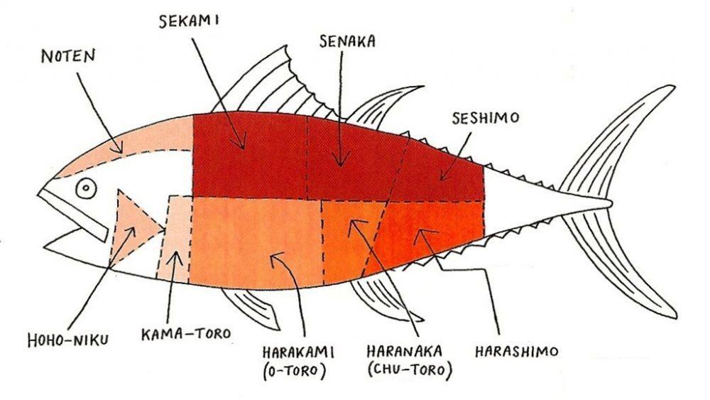 Breve guida ragionata al Tonno nella cucina giapponese