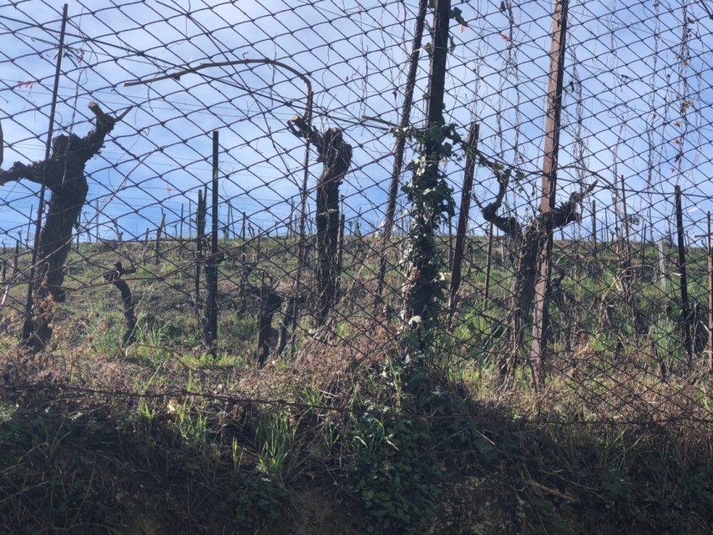 Montevecchia, vigne sulle colline circostanti