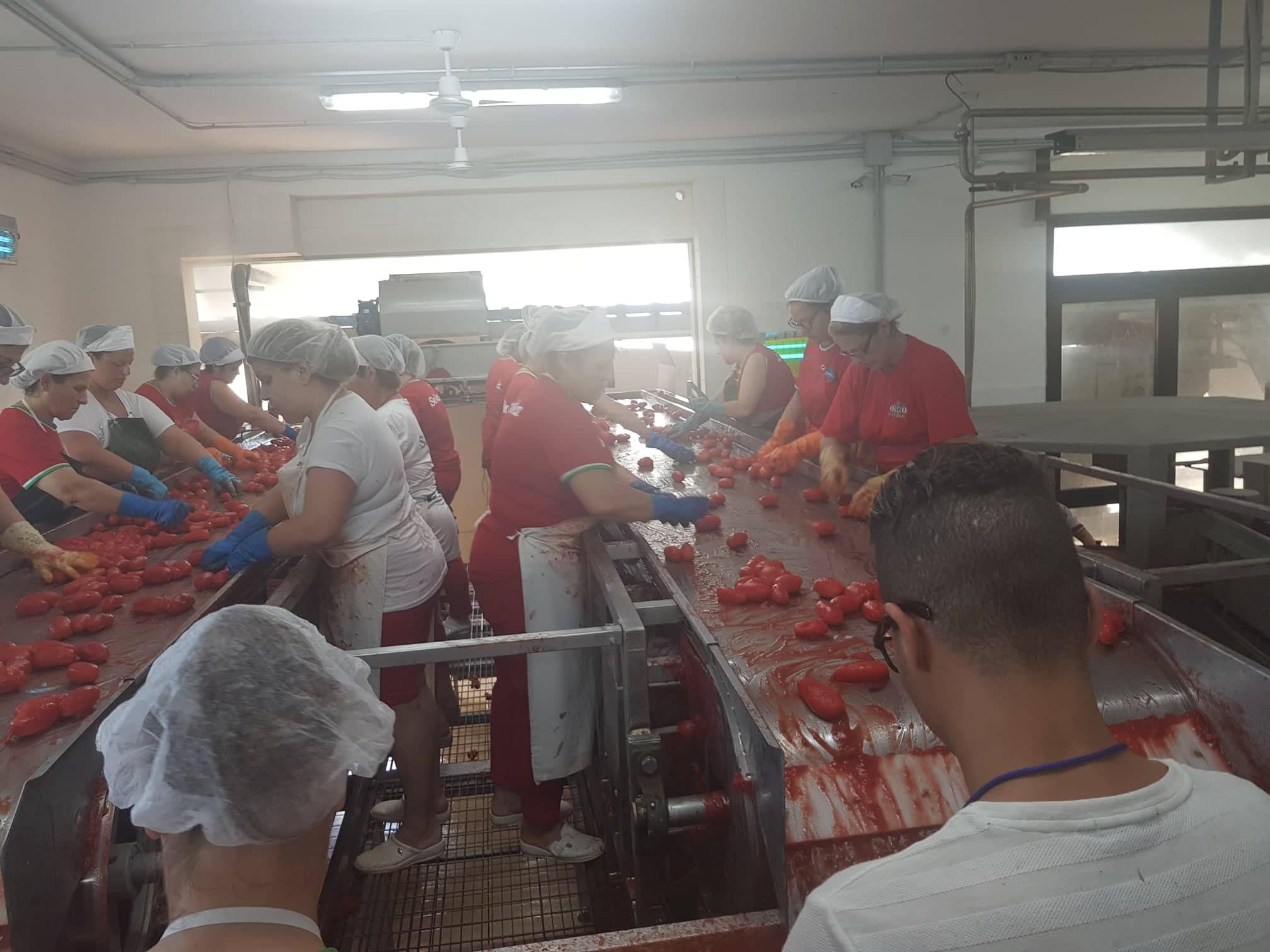 Solania, la lavorazione manuale del pomodoro