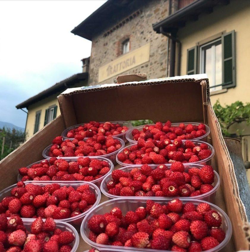 Le fragoline di bosco dell'Albenza