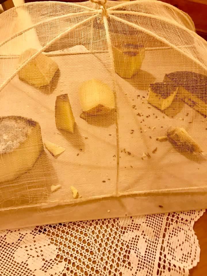 La Subida, i formaggi