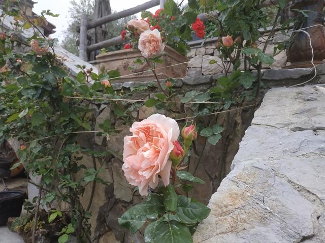 Villa Rosa di Nonna Rosa - le rose del giardino