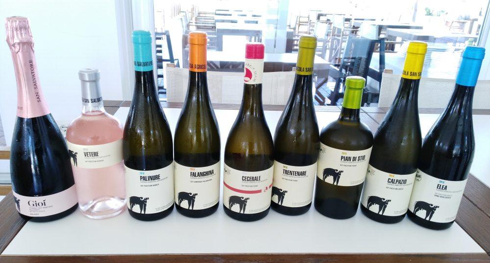 Vini di San Salvatore - Nuove annate
