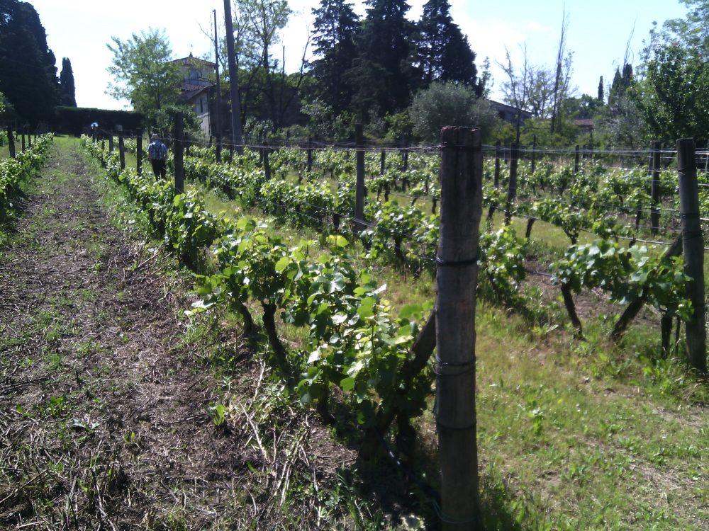 eatprato- le vigne del marchese Pancrazi