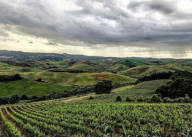 Le vigne di Terriciola