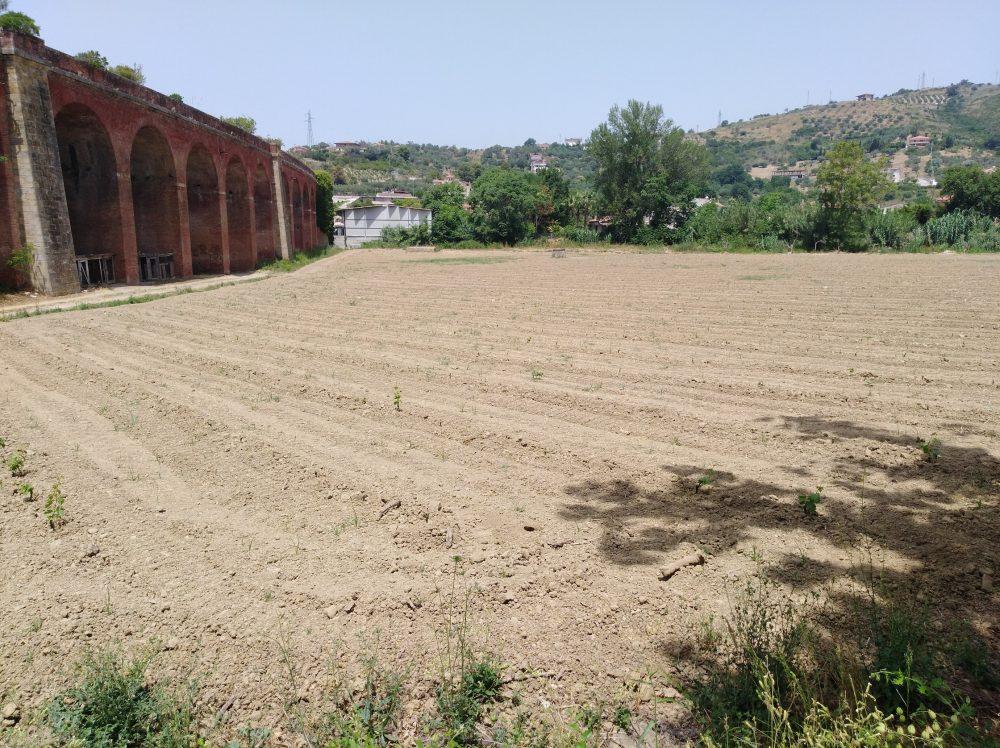 Azienda Verrone Nuovo impianto di Fiano