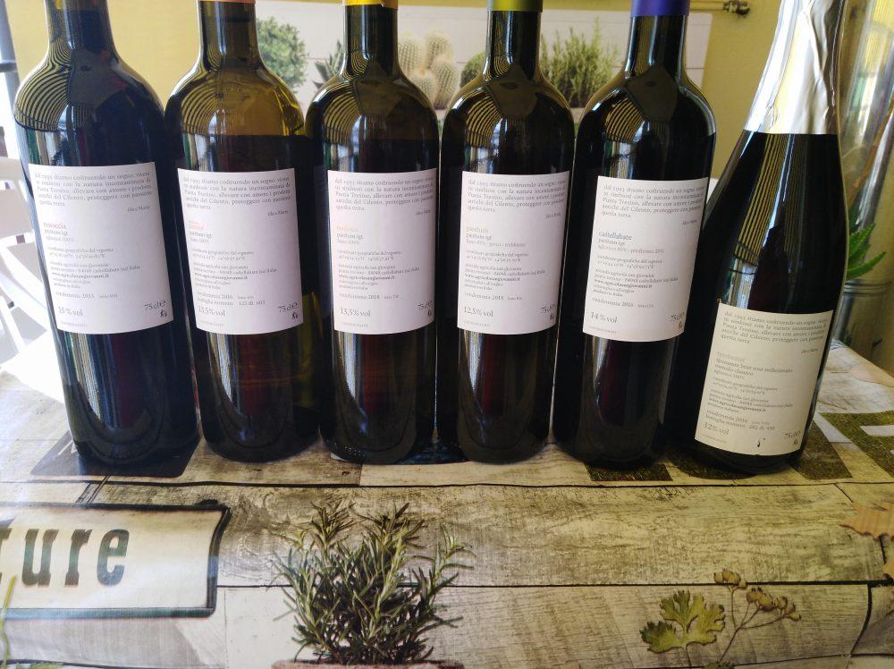 Controetichette vini di Sangiovanni