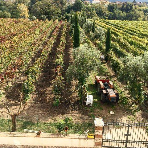 Le vigne che circondano l'abitazione