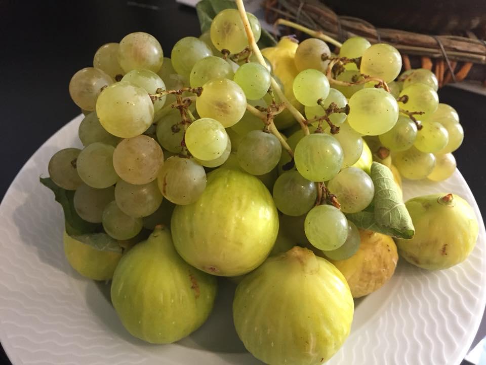 En Gioi, Agrilocanda cilentana, uva e fichi