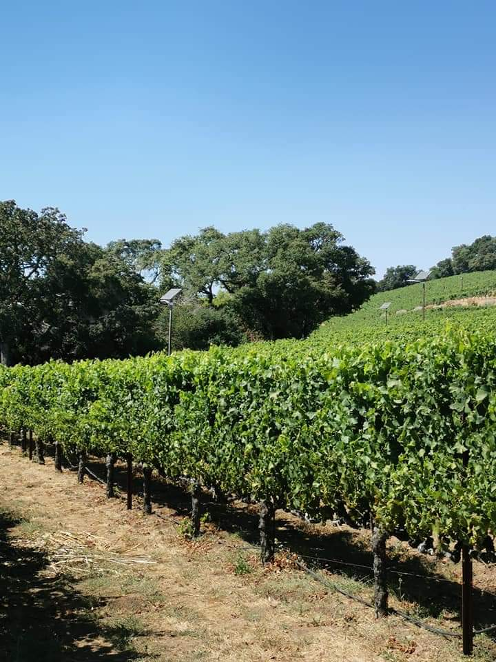 Benziger Vineyards