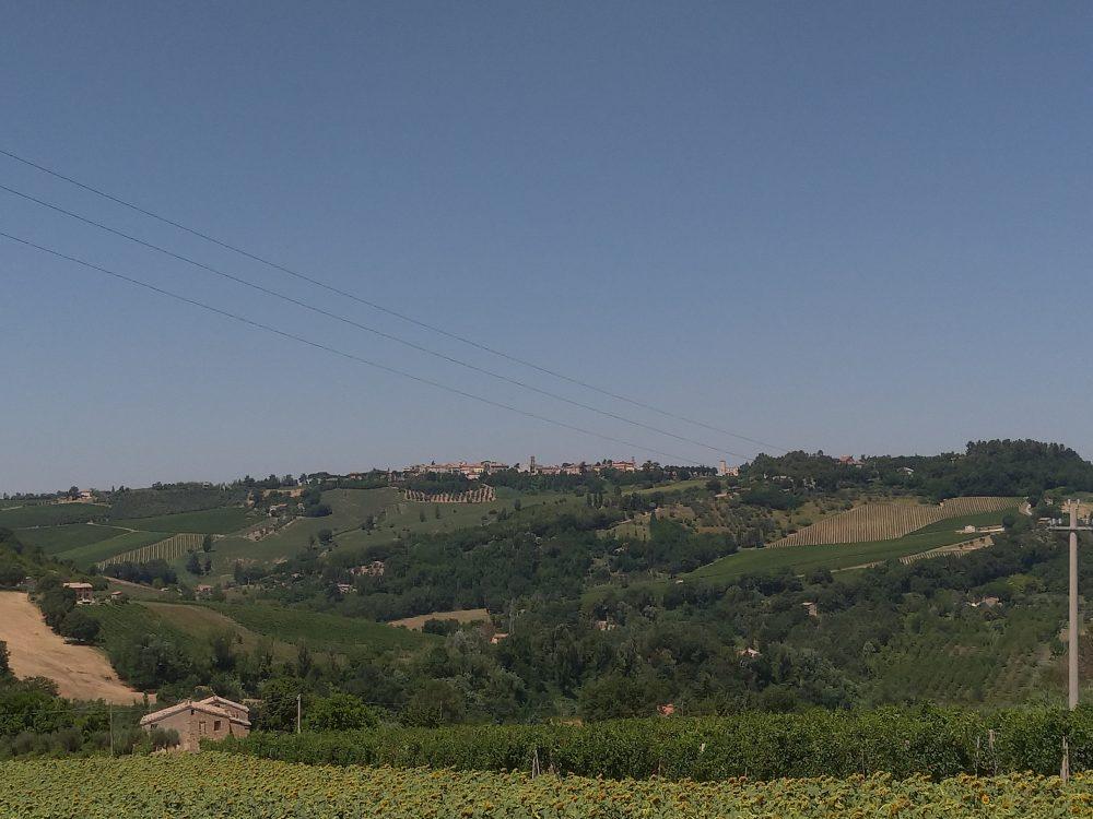 Cantina Colonnara - Vista delle viti dall'azienda