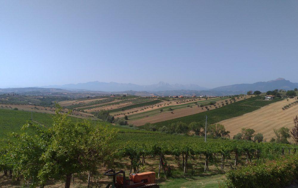 Filari di Montepulciano in pergola abruzzese con il Gran Sasso sullo sfondo lontano