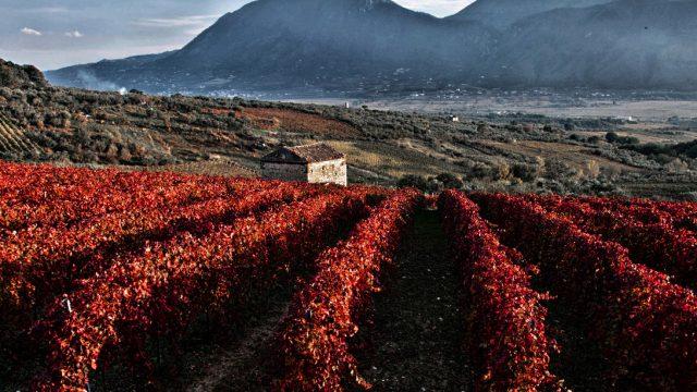 Le vigne del Sannio
