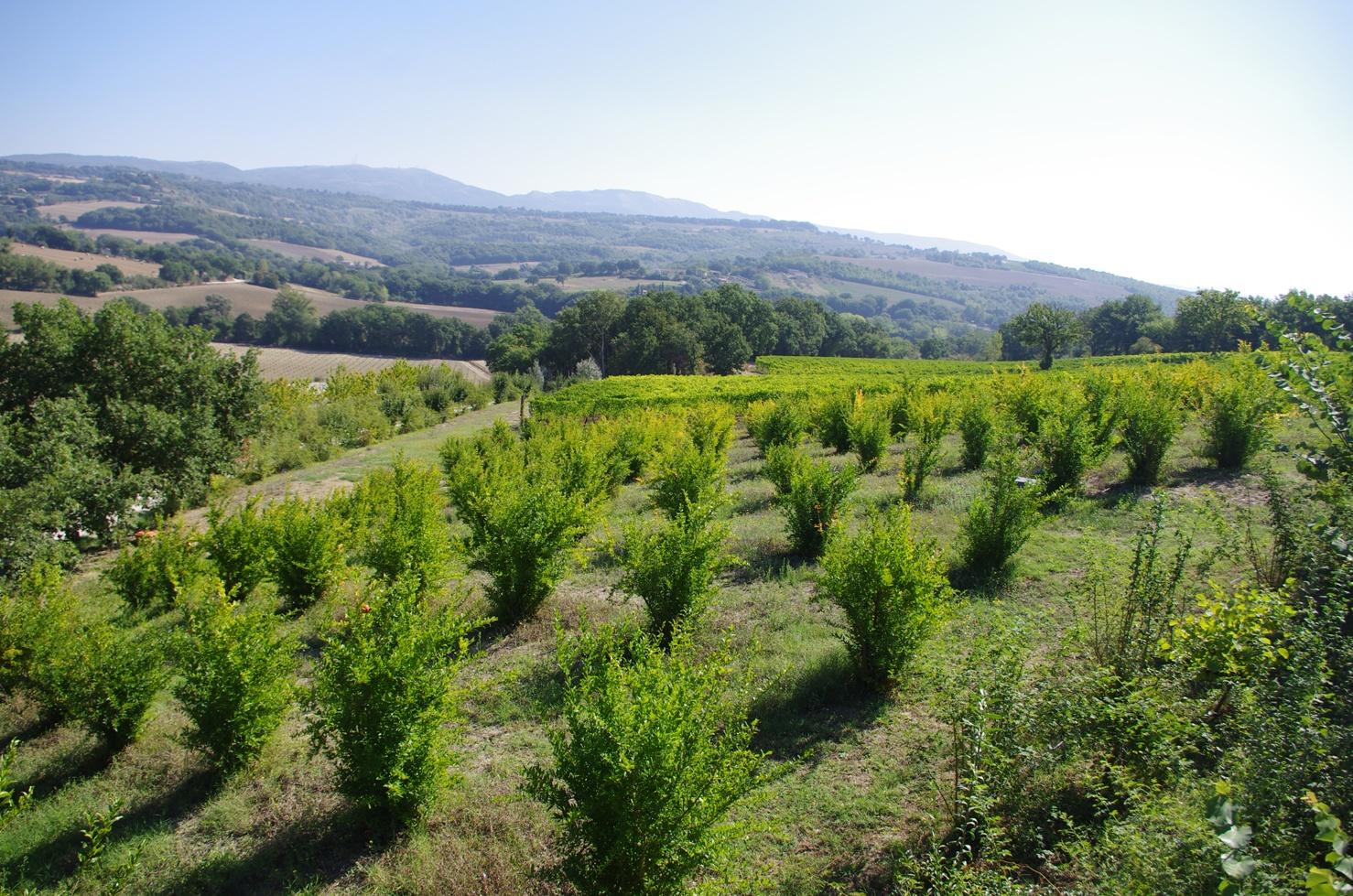 Cantina Roccafiore - Melograni