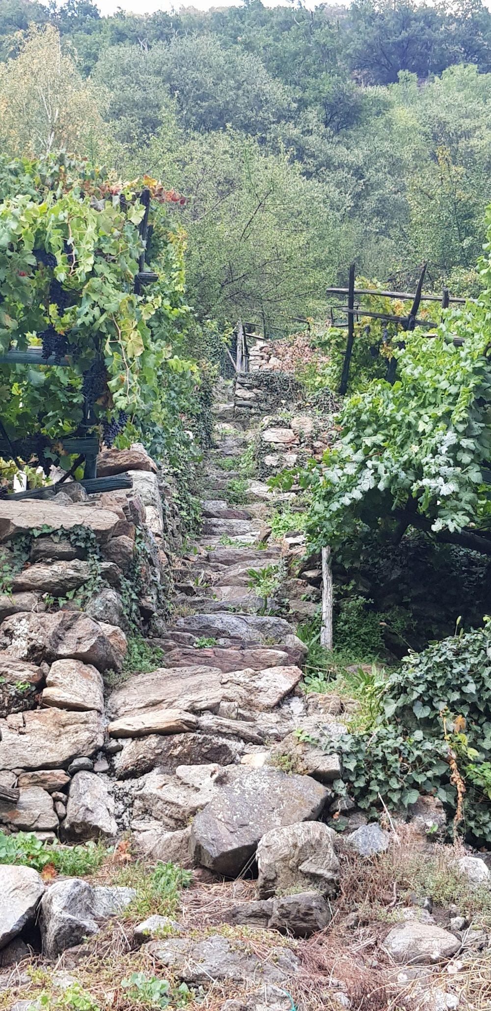 Muraje Carema - viticoltura eroica ripidita'