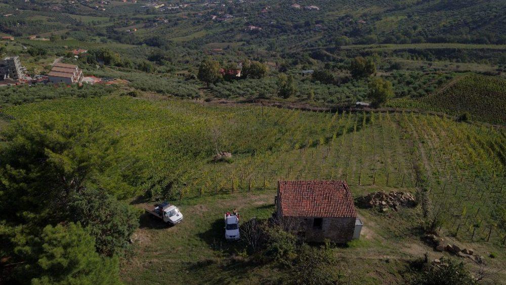 Vigna azienda agricola Cicalese Rossella