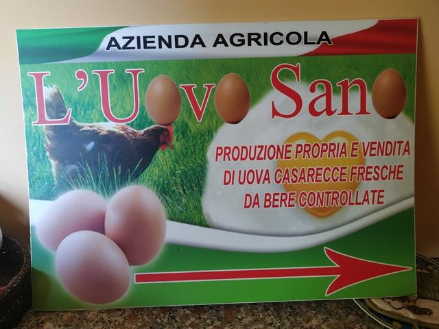 Azienda agricola L'uovo sano