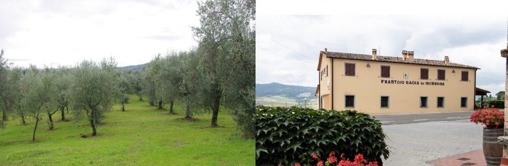 Badia di Morrona - Uliveto e Frantoio