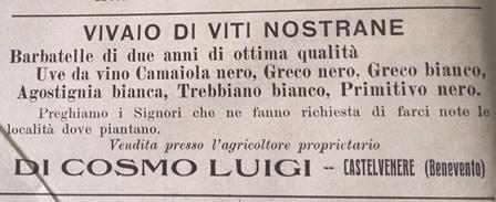 Le barbatelle del vivaio Di Cosmo (1913)