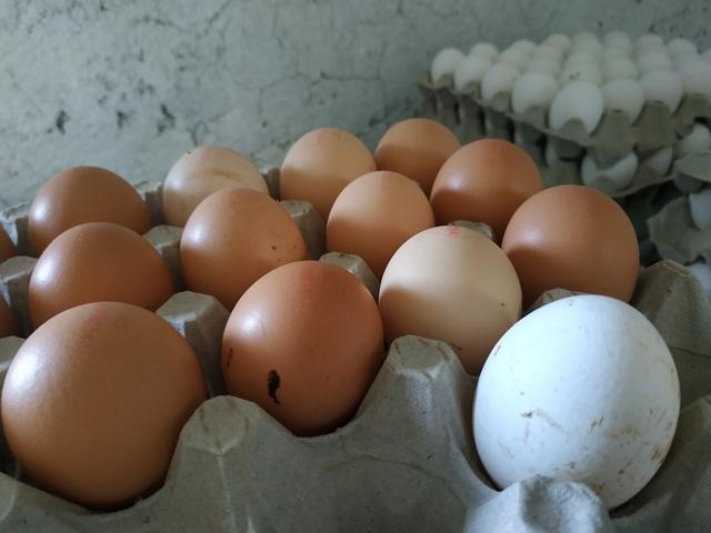 Le uova dell'azienda agricola L'uovo sano