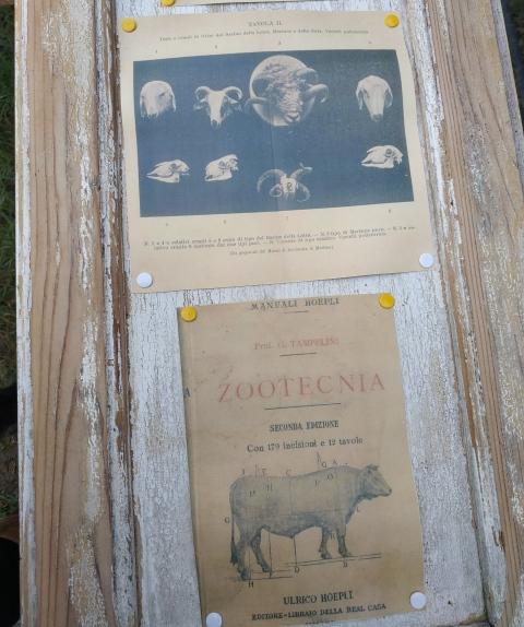 Manuale Hoepli di Zootecnia del 1905