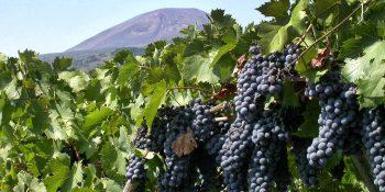 Verso il Distretto agroalimentare di qualità 'Vesuvio'