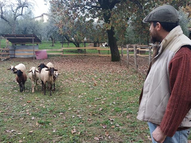 Roberto Dalia e le pecore quadricorna