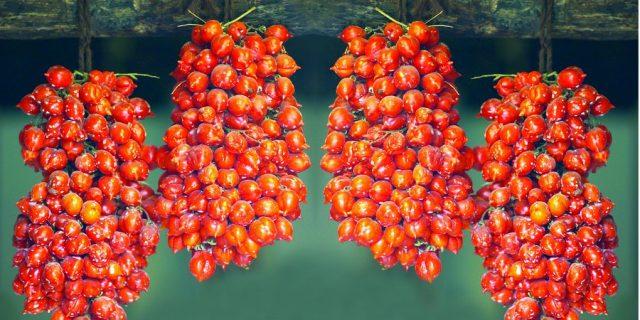 Pomodorini del piennolo, eccellenza vesuviana
