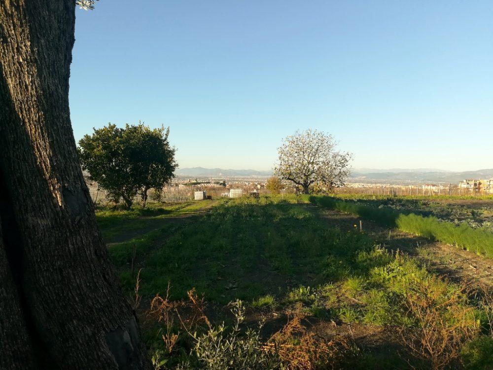Azienda Agricola Antica Trochlea - Guardando a Valle
