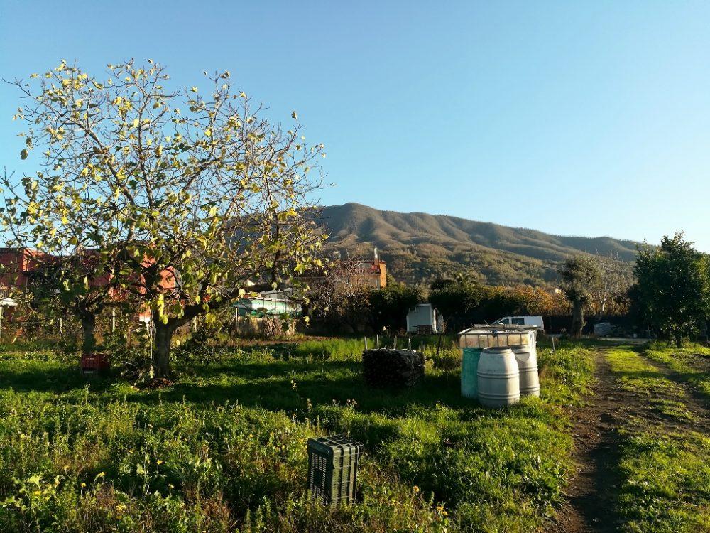 Azienda Agricola Antica Trochlea - Guardando il Vesuvio