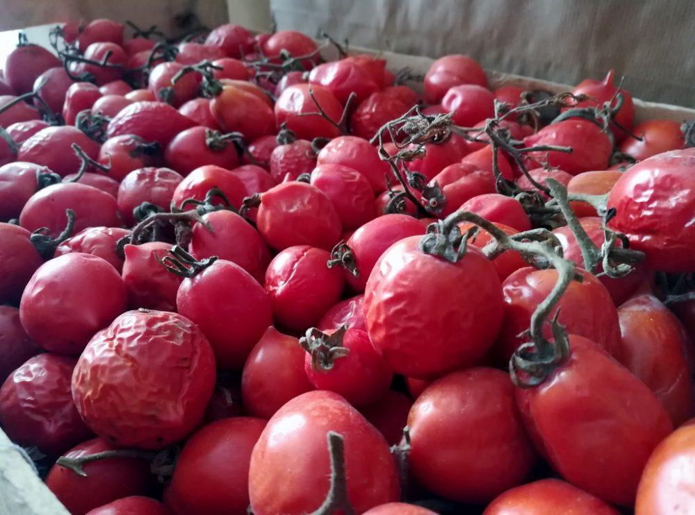 Azienda Agricola Antica Trochlea - I Pomodorini del Piennolo del Vesuvio