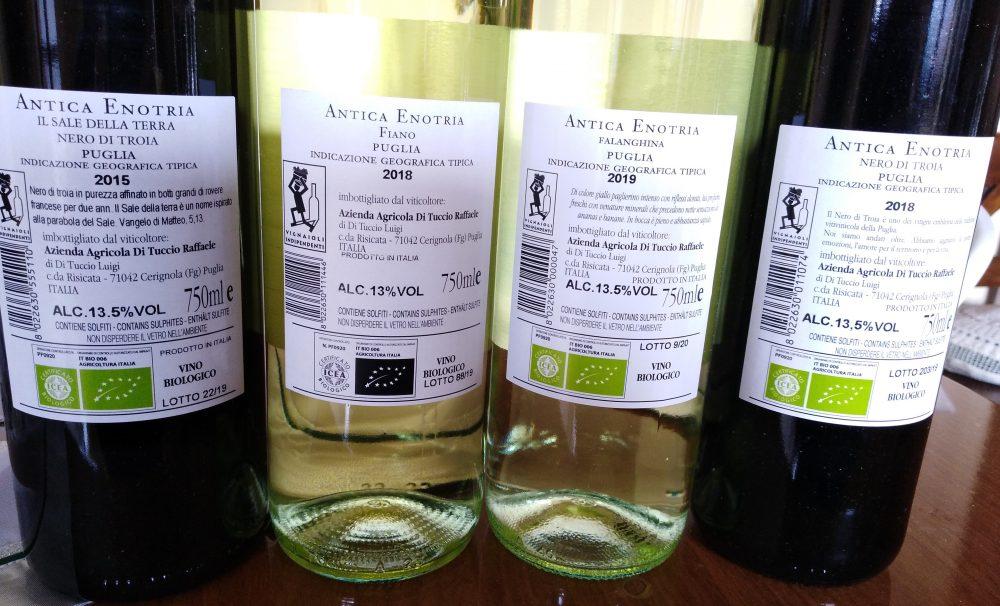 Controetichette vini Antica Enotria Nuove annate